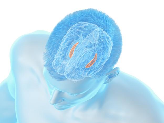 brain temporal lobe and language centers